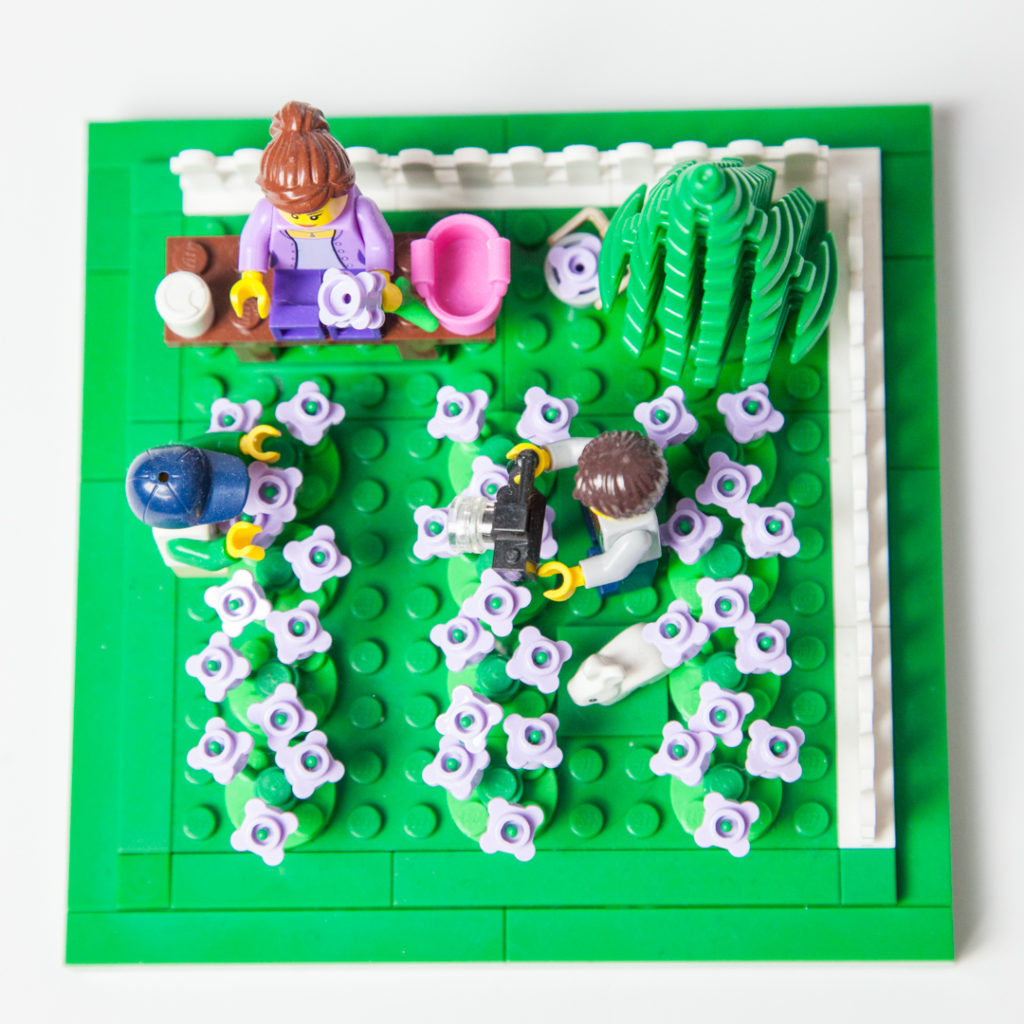 Overhead view of our Lego lavender field by Door County Bricks